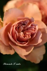 rose'カフェラテ'