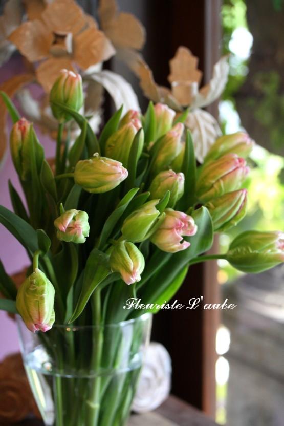 tulip'スプリングパーロット'