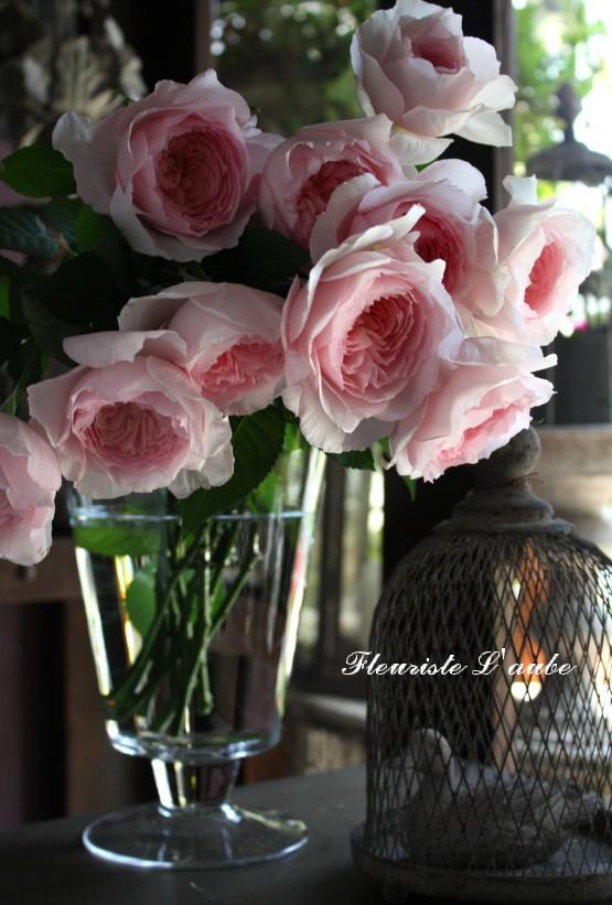 rose'美咲'